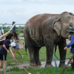 Animal Lovers Club Provides Assistance to Wildlife Foundation