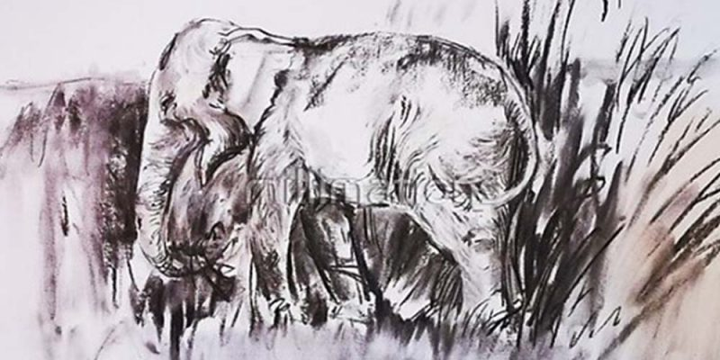 FAA Lecturer Holds Workshop on Drawing Elephants